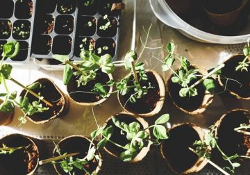 Want to start your own edible garden ?